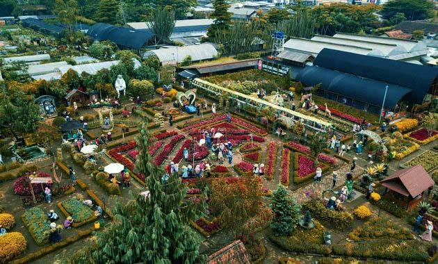 begonia-garden