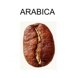 jenis-biji-kopi-arabica