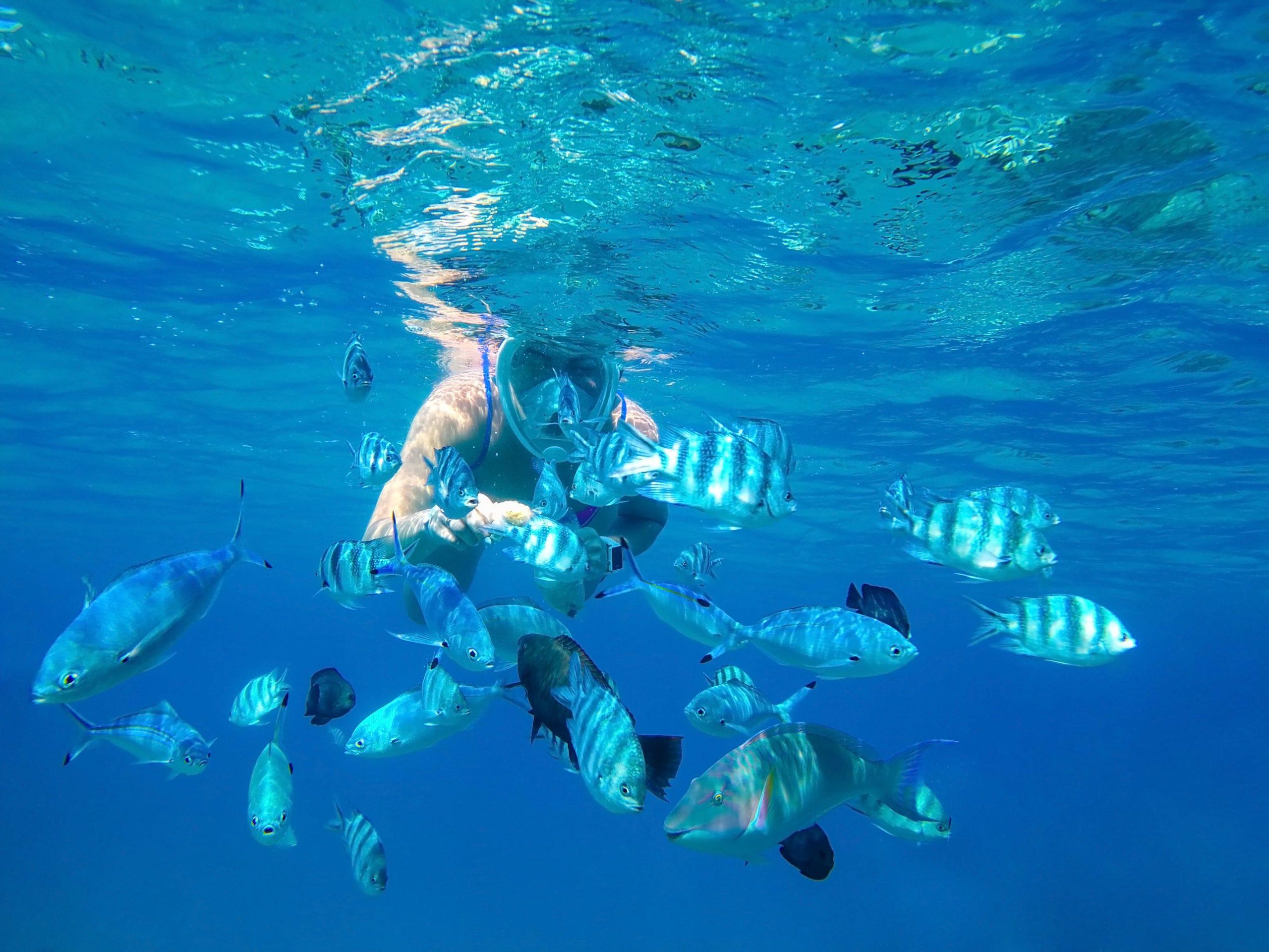 snorkeling-tanjung-benoa-bali