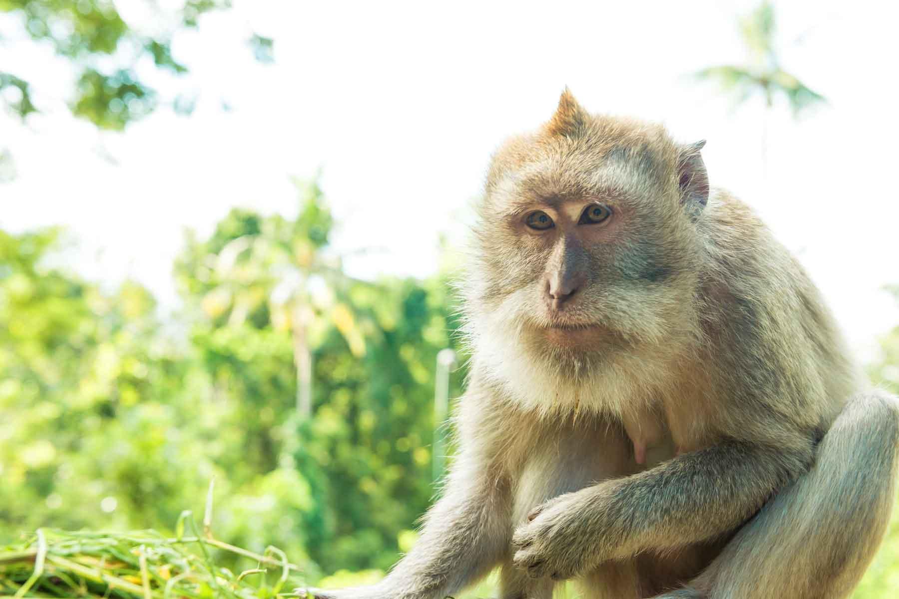 tempat-wisata-di-ubud-monkey-forest-bali