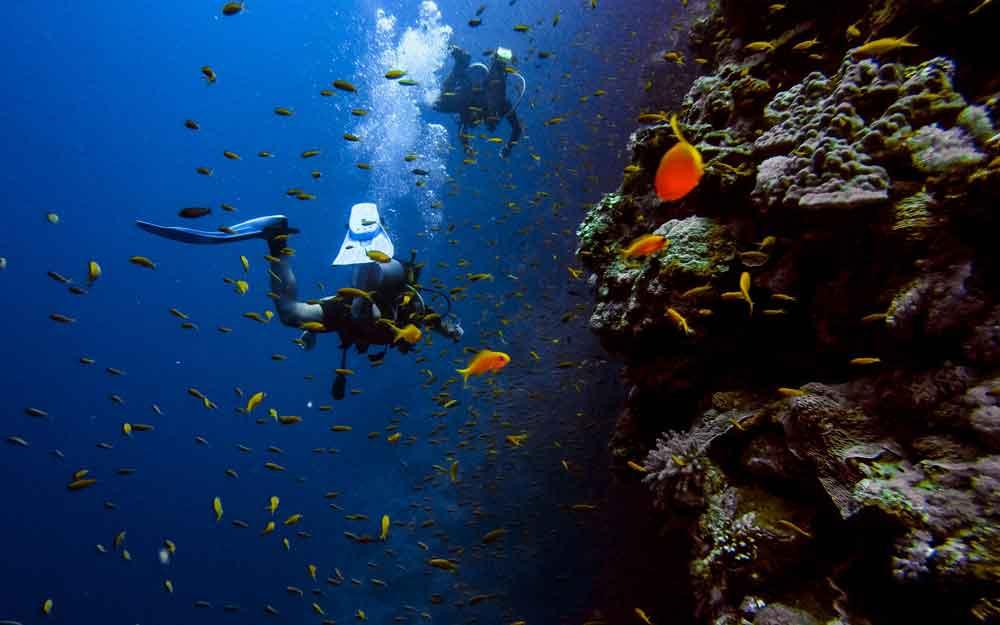 diving-di-taman-nasional-komodo