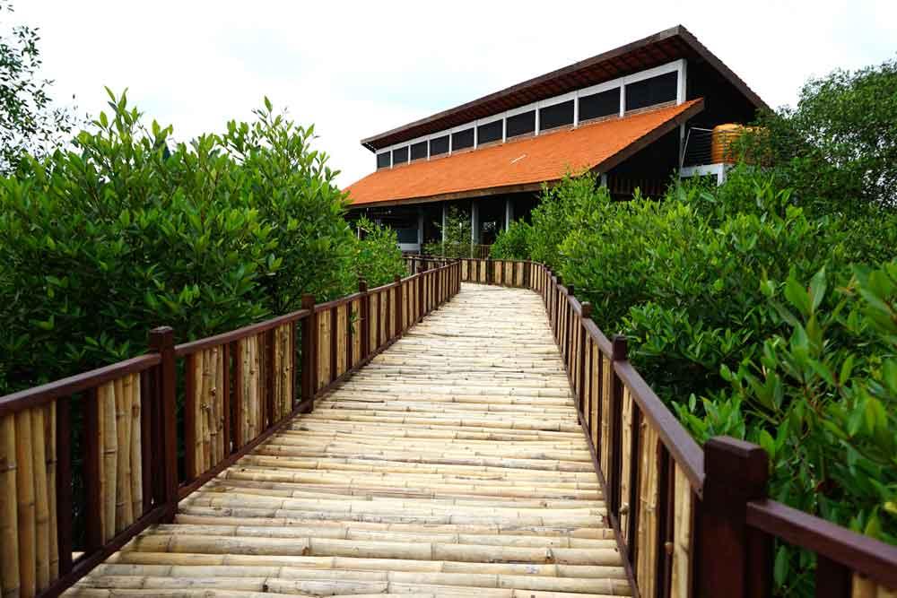 gambar-wisata-hutan-mangrove-wonorejo-di-surabaya