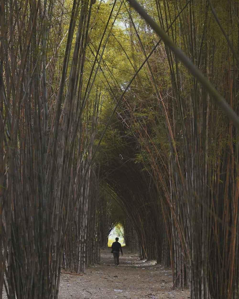 hutan-bambu-surabaya-keputih