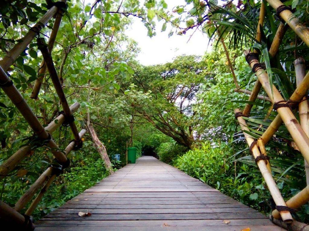 hutan-mangrove-wonorejo-rungkut